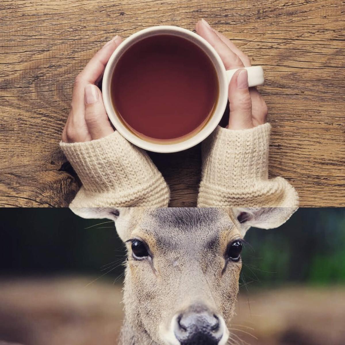 Hors paires - cerf et thé